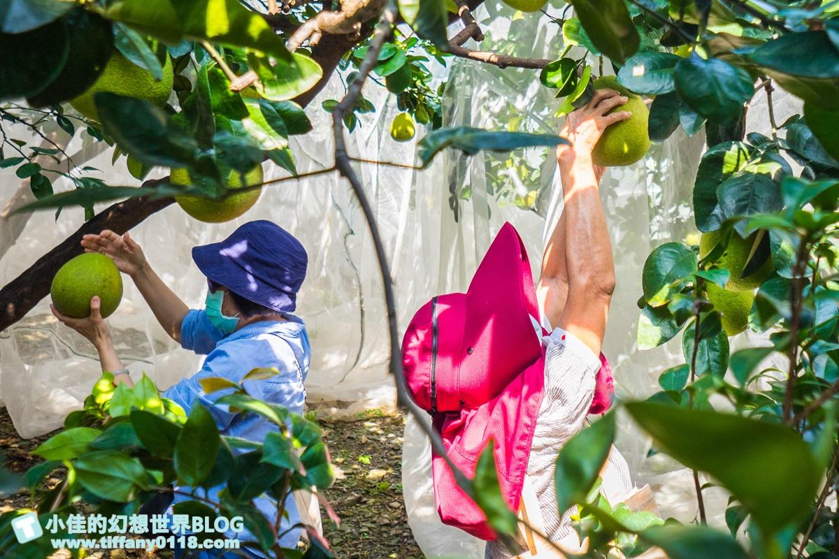 [宜蘭旅遊]九月限定冬山採柚趣/採柚+仁山植物園+梅花湖+合菜+3樣伴手禮只要799元完全超值
