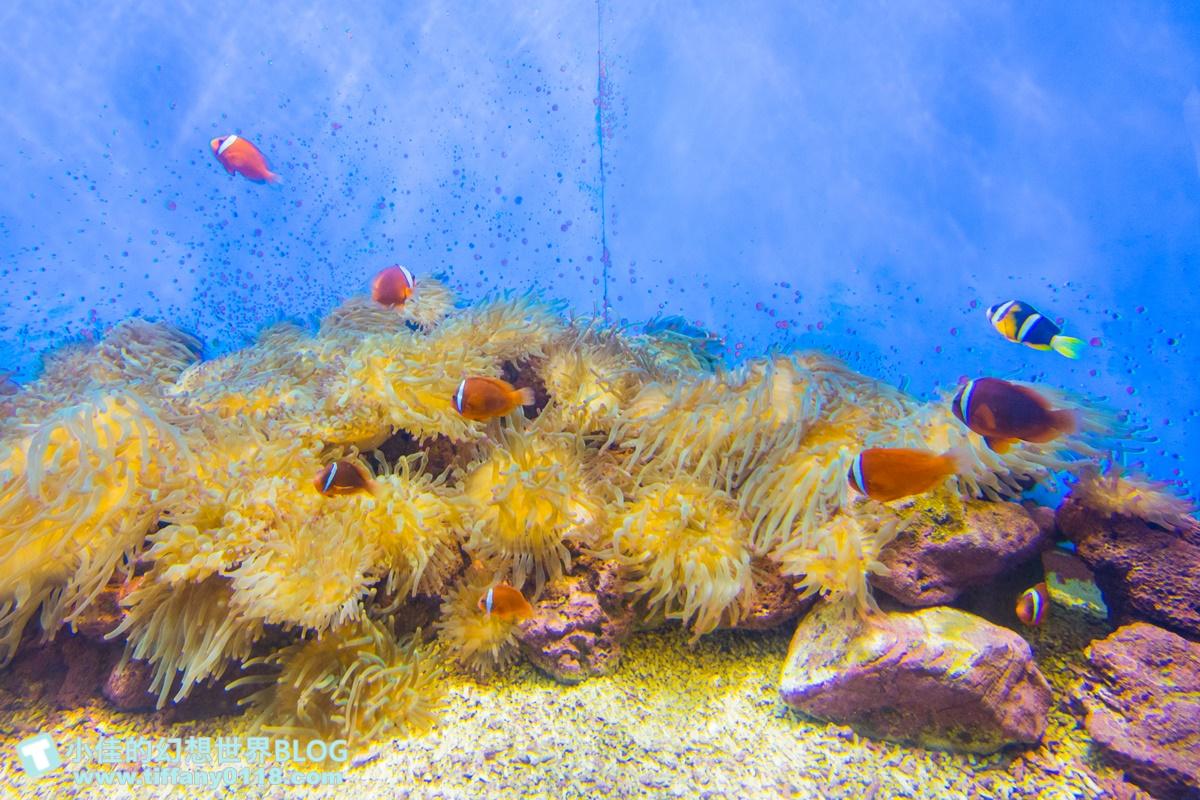 [澎湖景點]2021澎湖水族館全攻略/最優惠門票+活動時間表/超美海底隧道+必看大洋池餵食秀